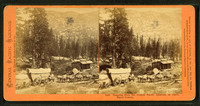 Teaming_from_the_Central_Pacific_Railroad_at_Cisco,_Placer_County