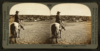 Round-up_on_the_Sherman_ranch,_Geneseo,_Kansas