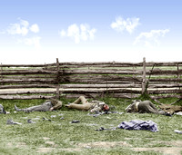 01103 - Bodies of Confederate soldiers by fence on Hagerstown pike, Antietam, Maryland