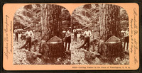 Cutting_timber_in_the_state_of_Washington
