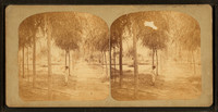 View_of_a_man_standing_in_the_Park